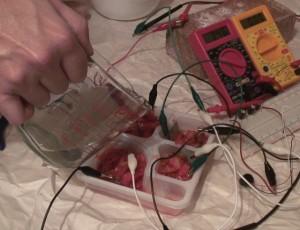 Tomato Battery