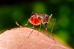 Early Symptoms of Dengue Fever
