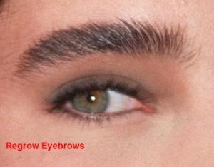 Regrow Eyebrows