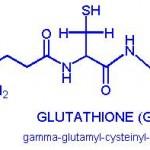 increase glutathione level