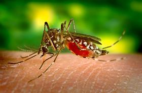 Yellow Fever Causes, Signs & Symptoms, and Treatment